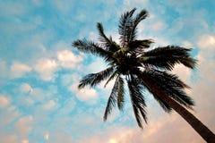 Opinión inferior sobre la palmera con el cielo azul Foto de archivo