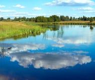 Opinión juncosa del lago summer fotos de archivo libres de regalías