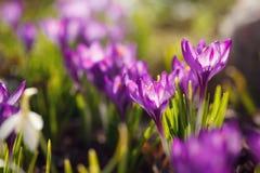 Opinión la lila floreciente con una profundidad baja Fotos de archivo