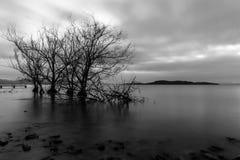Opinión larga de la exposición de un lago en la oscuridad, con perfectamente aún agua Fotos de archivo libres de regalías