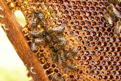 Opinión las abejas de trabajo en el panal con la miel dulce Imagenes de archivo