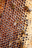 Opinión las abejas de trabajo en el panal con la miel dulce Imagen de archivo libre de regalías
