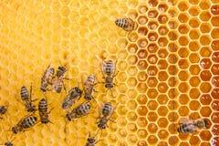 Opinión las abejas de trabajo en el panal con la miel dulce Fotos de archivo