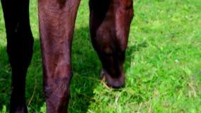 Opinión los caballos de granja en pasto Planes de gestión de la mala hierba para los pastos del caballo metrajes