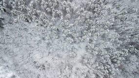 Opinión los pinos nevados en el bosque, visión superior Foto de archivo