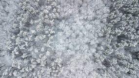 Opinión los pinos nevados en el bosque, visión superior Imagen de archivo