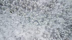 Opinión los pinos nevados en el bosque, visión superior Fotografía de archivo