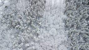 Opinión los pinos nevados en el bosque, visión superior Fotografía de archivo libre de regalías