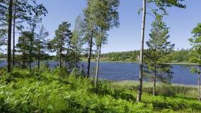 Opinión magnífica del paisaje de la naturaleza del lago con los árboles altos verdes en fondo del cielo azul Suecia, Europa metrajes