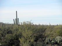Opinión nublada del desierto Foto de archivo libre de regalías
