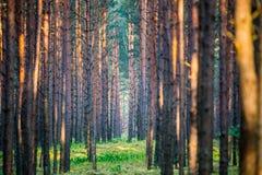 Opinión panorámica del bosque fotografía de archivo