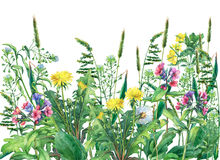 Opinión panorámica las flores y la hierba salvajes del prado, aislada en el fondo blanco Fotografía de archivo libre de regalías