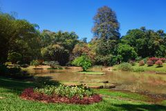 Opinión panorámica rey botánico real Gardens, Peradeniya, Sri Lanka Callejón, lago y río Imagenes de archivo