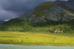 Opinión pintoresca del paisaje de Akkem River Valley Monta?as de Altai fotografía de archivo