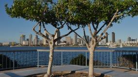 Opinión pintoresca San Diego Skyline del parque centenario en la isla de Coronado almacen de video