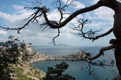 Opinión real de la bahía con el árbol. Crimea. Imágenes de archivo libres de regalías