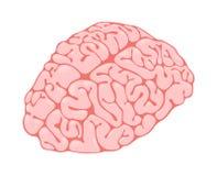 Opinión rosada de la vertical del cerebro Imágenes de archivo libres de regalías