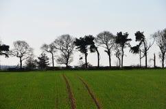 Opinión rural del campo Foto de archivo libre de regalías