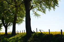Opinión rural del campo Imagen de archivo libre de regalías