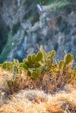 Opinión salvaje del cactus con el fondo borroso durante puesta del sol foto de archivo libre de regalías