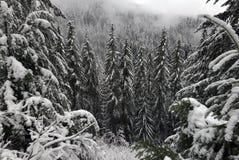 Opinión Snoqualmie de la nieve Imagenes de archivo