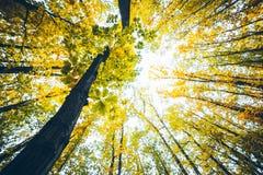 Opinión sobre árbol del otoño con las hojas amarillas Fotos de archivo libres de regalías