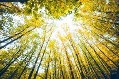Opinión sobre árbol del otoño con las hojas amarillas Foto de archivo