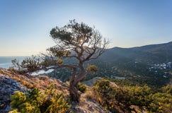 Opinión sobre árbol torcido en la cuesta pedregosa, cielo azul limpio en backgroun Imágenes de archivo libres de regalías