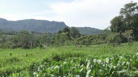 Opinión sobre campos con las verduras de la montaña y la casa de granjeros Bali, Indonesia almacen de metraje de vídeo