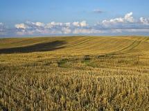 Opinión sobre el campo de la cosecha. Imagen de archivo