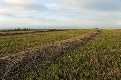 Opinión sobre el campo de la cosecha. Foto de archivo libre de regalías