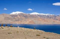 Opinión sobre el lago Tsomoriri, valle de Rupshu imagen de archivo