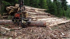 Opinión sobre el maderero moderno que procesa el árbol, cosecha de la madera, almacen de metraje de vídeo