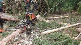 Opinión sobre el maderero moderno que procesa el árbol, cosecha de la madera, almacen de video