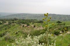 Opinión sobre el paisaje bíblico verde Beit Guvrin Maresha durante invierno, Israel imagen de archivo libre de regalías