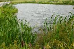 Opinión sobre el paisaje de la orilla del lago Imagenes de archivo