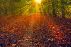 Opinión sobre el paisaje del otoño de árboles en día soleado foto de archivo libre de regalías