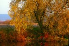 Opinión sobre el paisaje del otoño del río y de árboles en día soleado foto de archivo libre de regalías