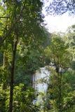 Opinión sobre la cascada en la selva Imagen de archivo