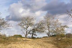 Opinión sobre los árboles que dejan sus hojas pasadas ir Estos árboles están en el área del Waterleidingduinen imágenes de archivo libres de regalías