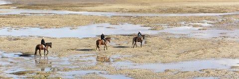 Opinión sobre tres jinetes del caballo que encuentran su manera en la playa en un día agradable fotos de archivo libres de regalías