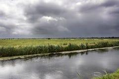 Opinión sobre un paisaje holandés típico en ciervo del het Groene, el país en el Randstad de los Países Bajos ilustración del vector