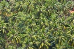 Opinión sobre una selva Foto de archivo