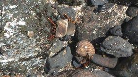 Opinión subacuática del cangrejo de ermitaño almacen de video