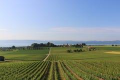 Opinión suiza del lago Fotografía de archivo libre de regalías