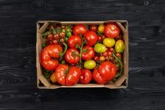 Opinión superior colorida de los tomates rojos, amarilla y verde en caja en fondo negro de madera Fotos de archivo libres de regalías
