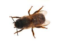 Opinión superior de la pequeña abeja Fotos de archivo libres de regalías