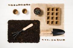Opinión superior de las herramientas que cultivan un huerto sobre el fondo de madera blanco de los tablones Foto de archivo