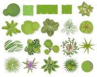 Opinión superior de los árboles Diversos árboles, sistema del vector de las plantas para el diseño arquitectónico o del paisaje A ilustración del vector