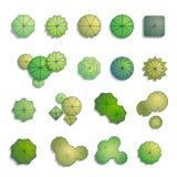 Opinión superior de los árboles para el diseño del paisaje Imagenes de archivo